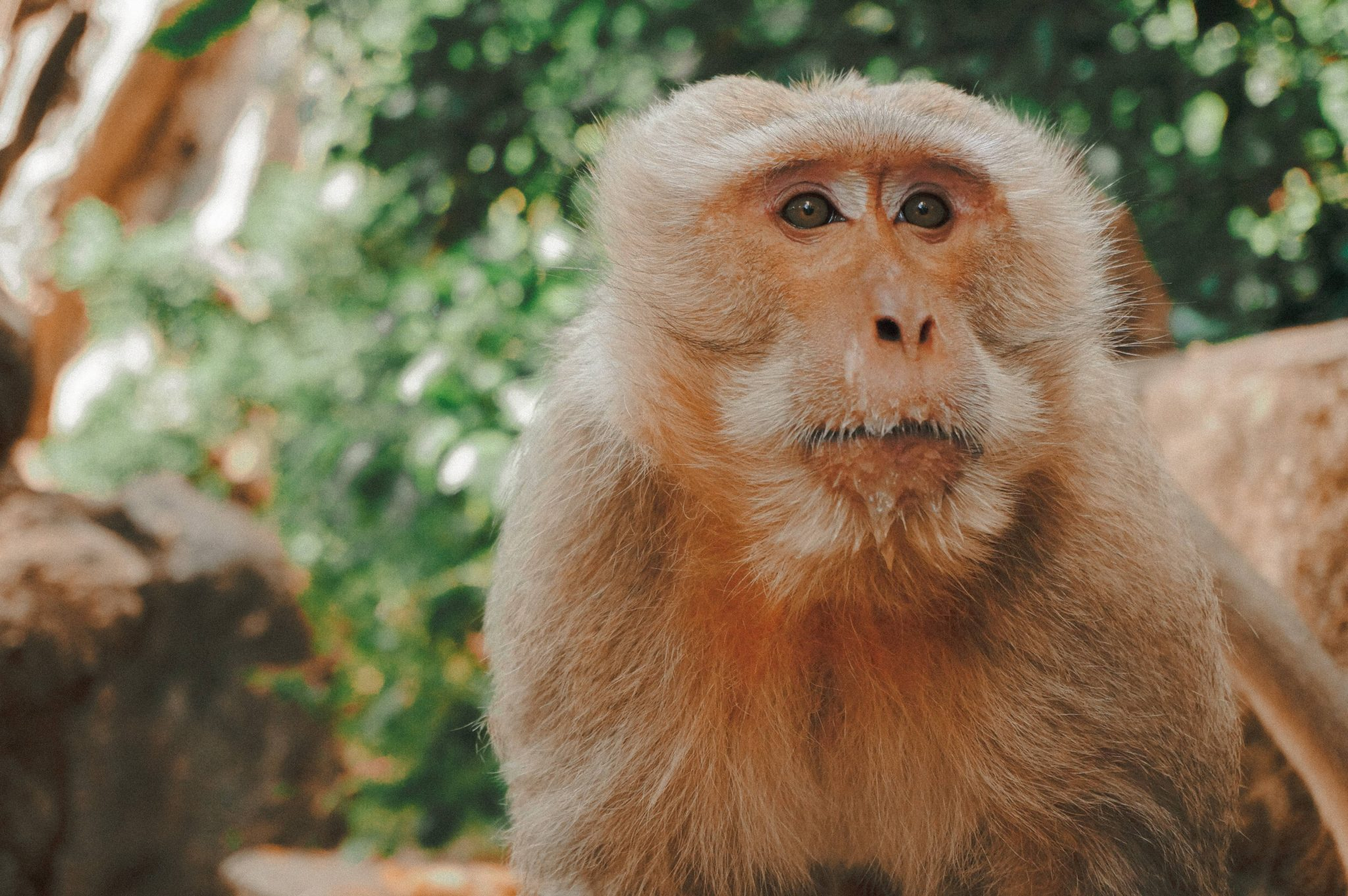 You can't teach an old monkey to pull faces! : Why be a web designer?